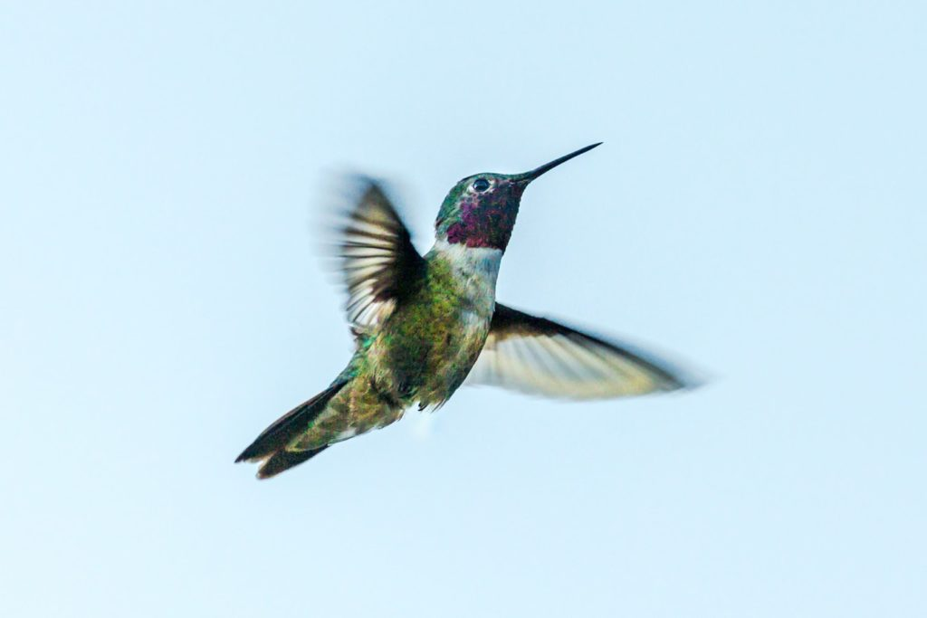 Passion vs Curiosity – The Flight of the Hummingbird