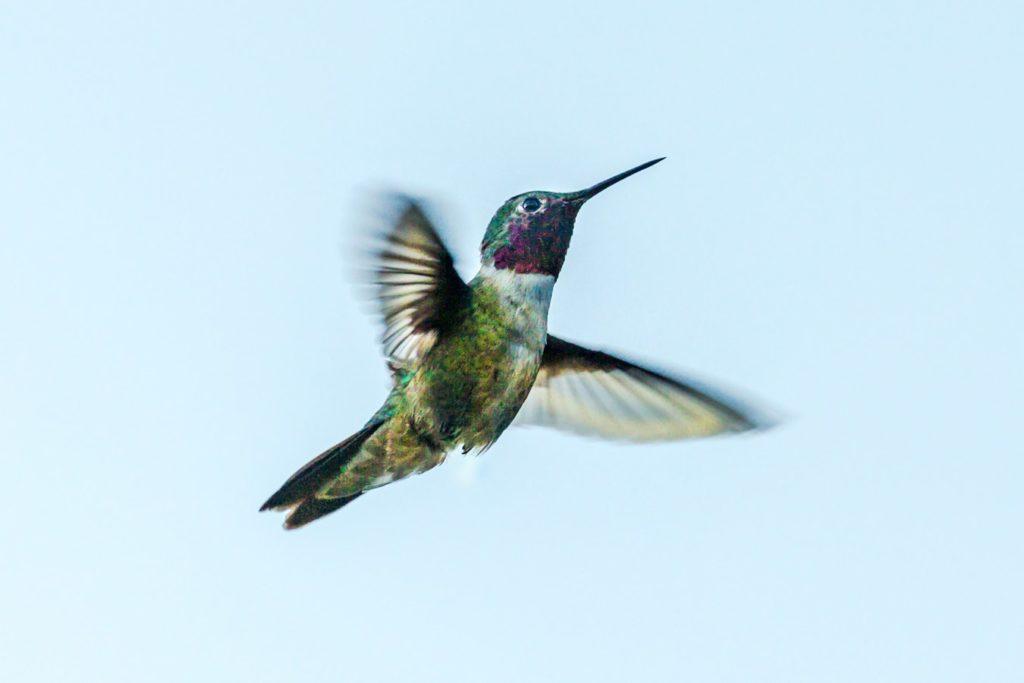 Passion vs Curiosity – The Flight of the Hummingbird